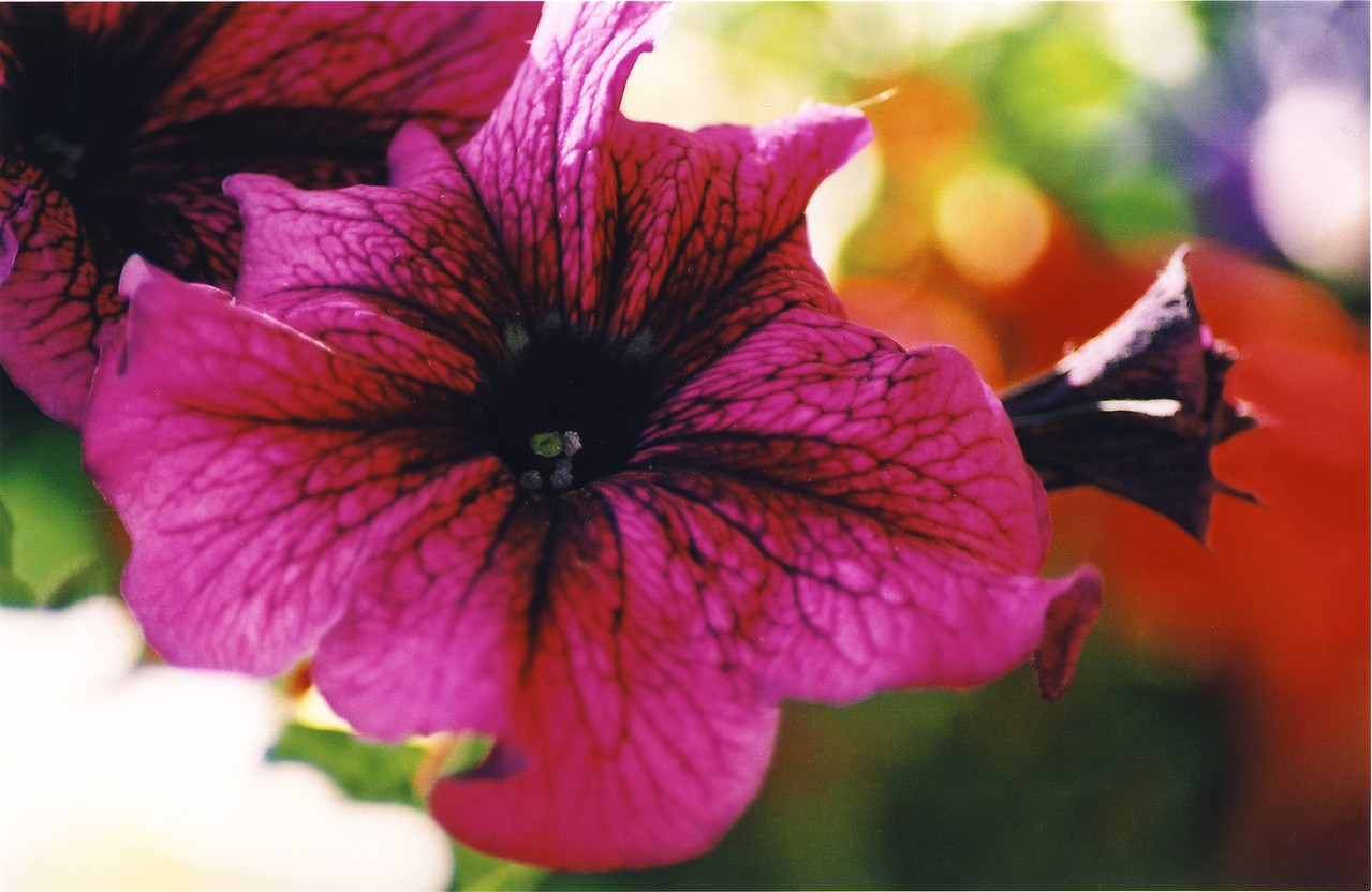 Jak dbać o rośliny w pojemnikach?