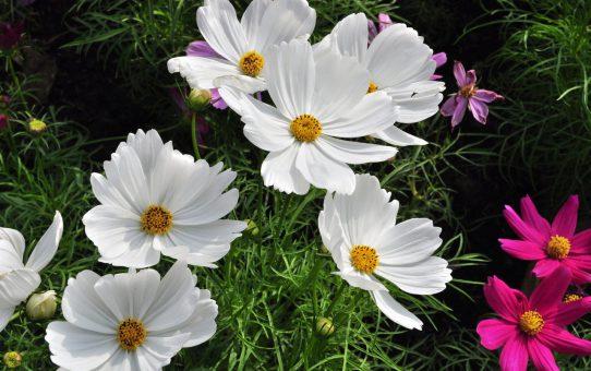 Urządzanie ogrodu – samemu czy profesjonalnie?